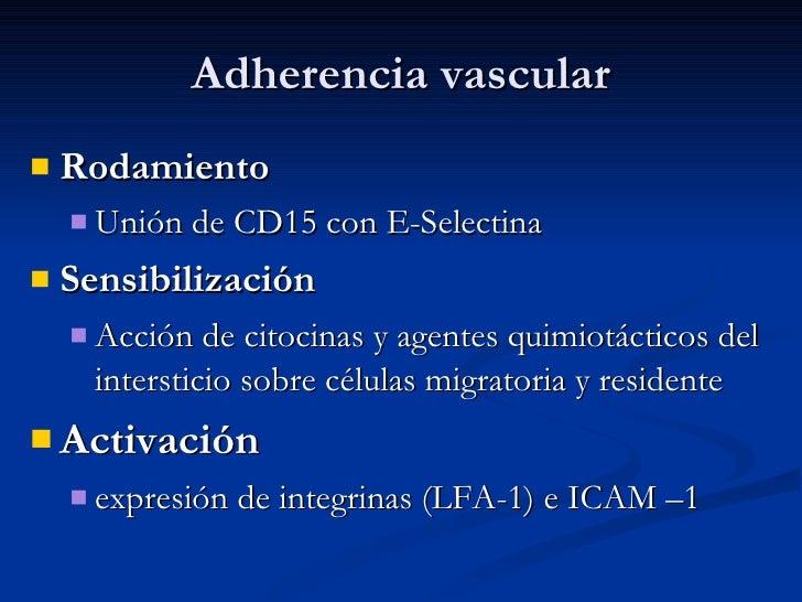 Adherencia vascular <ul><li>Rodamiento   </li></ul><ul><ul><li>Unión de CD15 con E-Selectina </li></ul></ul><ul><li>Sensib...