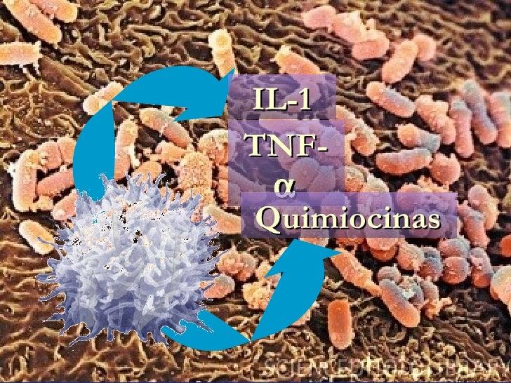 IL-1 TNF-  Quimiocinas