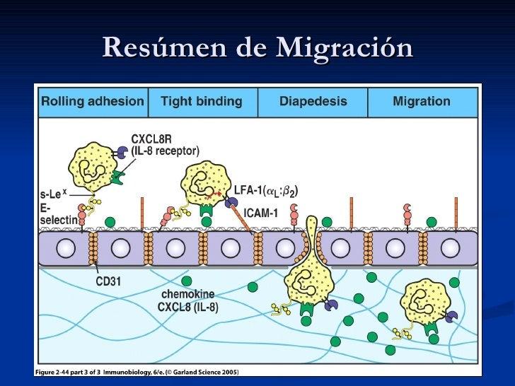 Resúmen de Migración