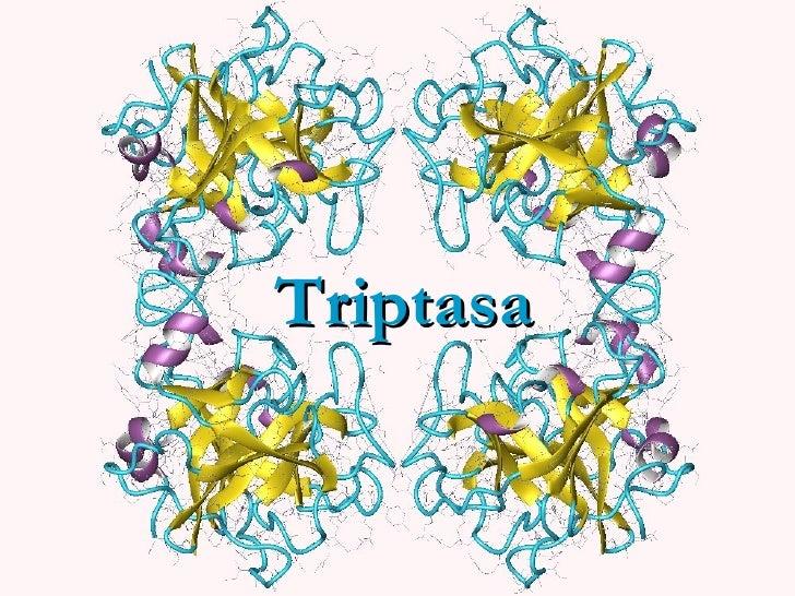 Triptasa
