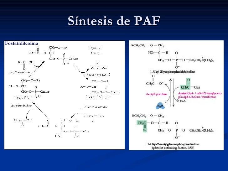 Síntesis de PAF Fosfatidilcolina