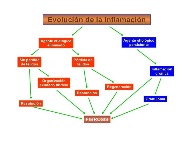 Evolución de la Inflamación Evolución de la Inflamación Agente etiológico eliminado Agente etiológico persistente Sin perd...