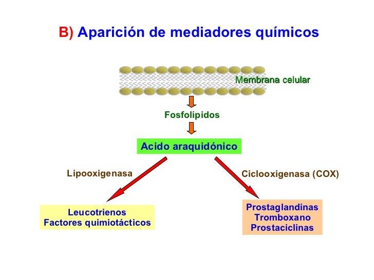 Membrana celular Fosfolípidos Acido araquidónico Leucotrienos Factores quimiotácticos Prostaglandinas Tromboxano Prostacic...
