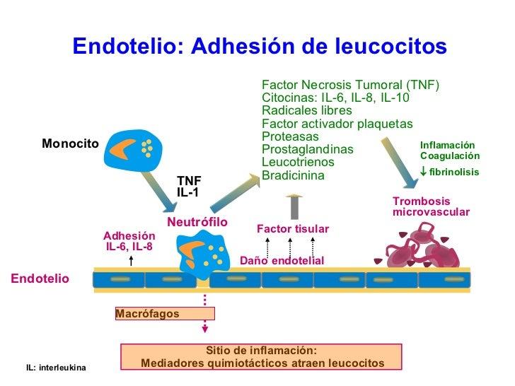 Endotelio: Adhesión de leucocitos IL: interleukina TNF IL-1 Monocito Sitio de inflamación:  Mediadores quimiotácticos atra...