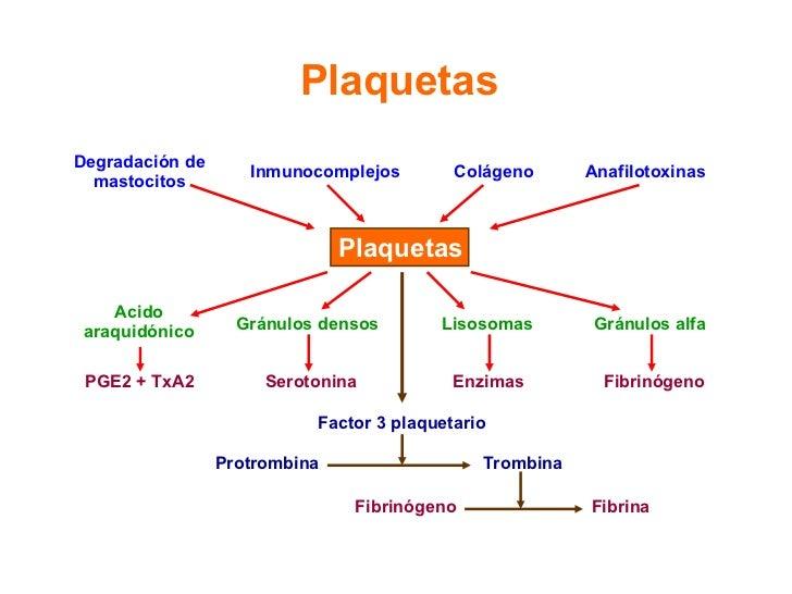 Plaquetas Plaquetas Degradación de mastocitos Inmunocomplejos Colágeno Anafilotoxinas Acido araquidónico Gránulos densos L...