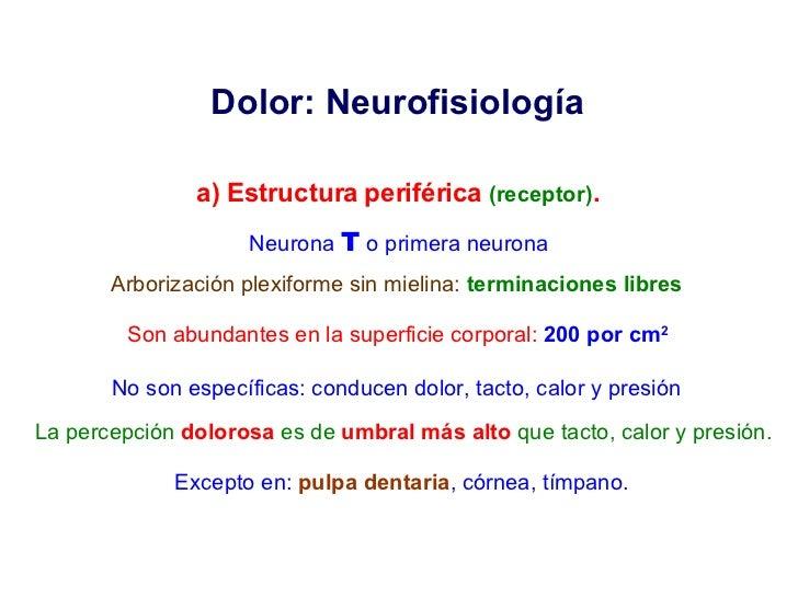 Dolor: Neurofisiología  a) Estructura periférica  (receptor) . Neurona  T   o primera neurona Arborización plexiforme sin ...