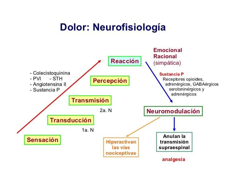 Dolor: Neurofisiología  Sensación Transducción Transmisión Percepción Reacción Neuromodulación <ul><li>- Colecistoquinina ...