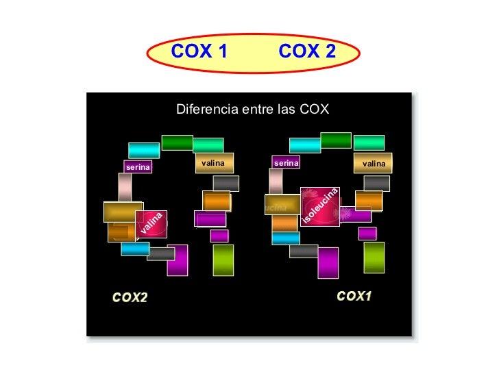 Diferencia entre las COX valina isoleucina serina serina valina valina COX 1 COX 2