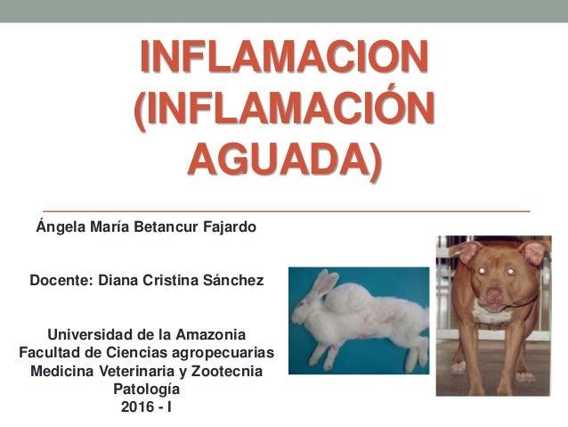 INFLAMACION (INFLAMACIÓN AGUADA) Ángela María Betancur Fajardo Docente: Diana Cristina Sánchez Universidad de la Amazonia ...