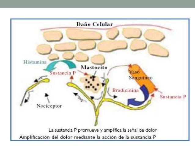 SISTEMA DE COAGULACION • Atrapan exudados • Microorganismos • Cuerpos Extraños CASCADA DE COMPLEMENTO • Deshidratacion • Q...