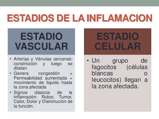 ESTADIOS DE LA INFLAMACION ESTADIO VASCULAR • Arterias y Vénulas cercanas: constricción y luego se dilatan • Genera conges...