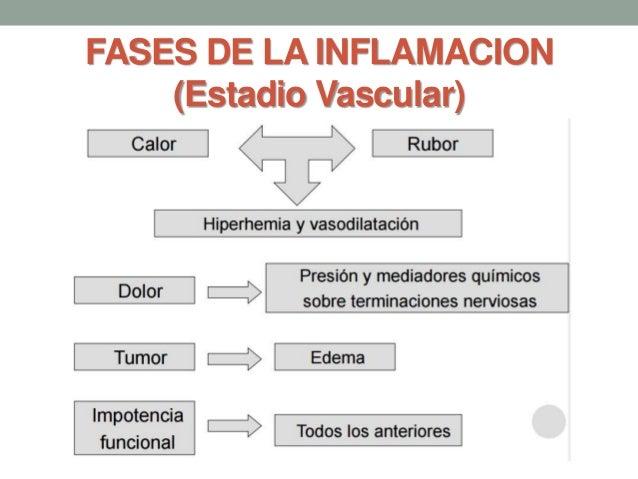 FASES DE LA INFLAMACION (Estadio Vascular)