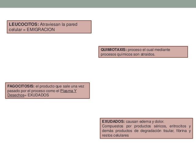 LEUCOCITOS: Atraviesan la pared celular = EMIGRACION QUIMIOTAXIS: proceso el cual mediante procesos químicos son atraídos....