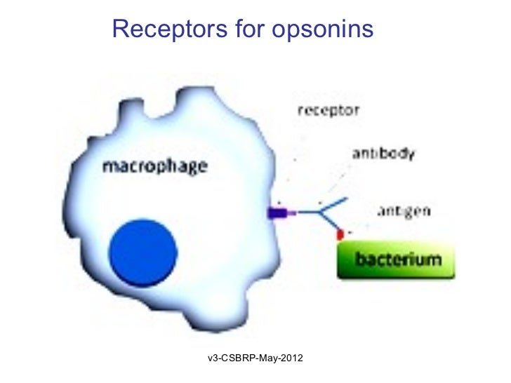 Receptors for opsonins        v3-CSBRP-May-2012
