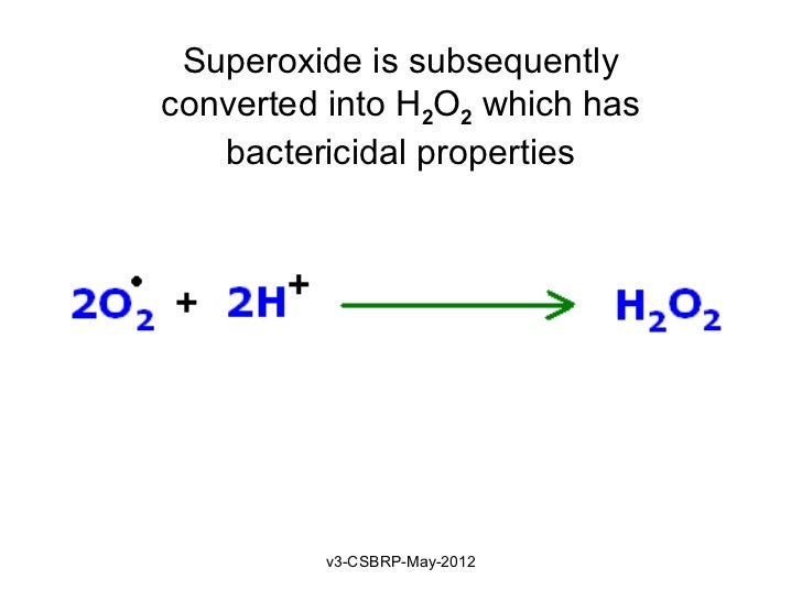 Superoxide is subsequentlyconverted into H2O2 which has   bactericidal properties         v3-CSBRP-May-2012
