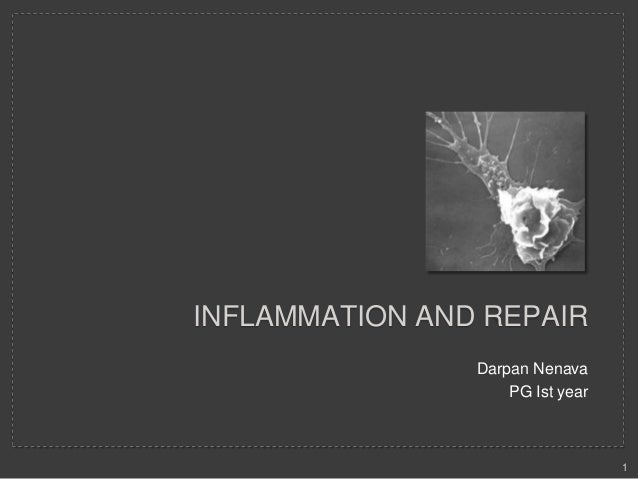 INFLAMMATION AND REPAIR Darpan Nenava PG Ist year  1