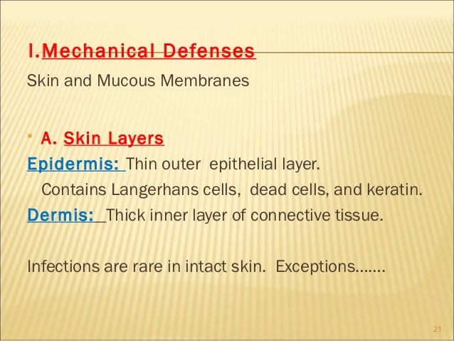 I.Mechanical DefensesSkin and Mucous MembranesA. Skin LayersEpidermis: Thin outer epithelial layer. Contains Langerhans c...