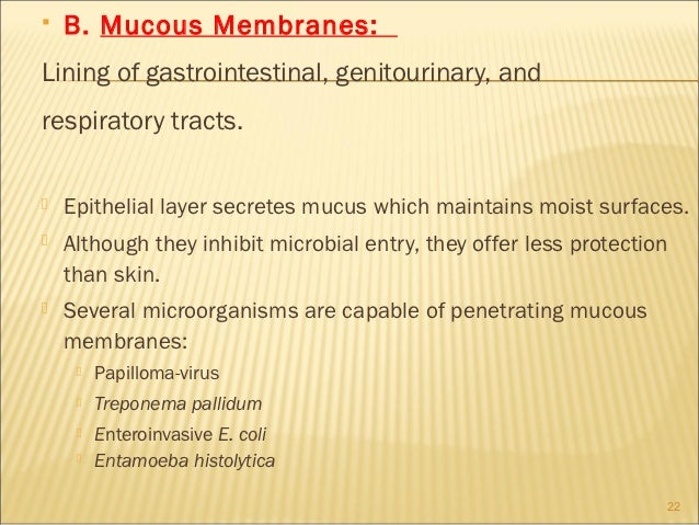   B. Mucous Membranes:Lining of gastrointestinal, genitourinary, andrespiratory tracts.   Epithelial layer secretes muc...