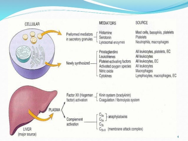 Temporal Variations of the Cardiovascular System 1992