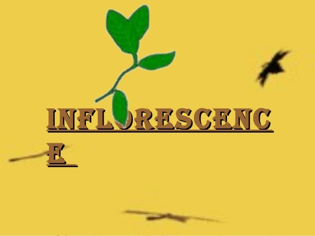 Inflorescenc e