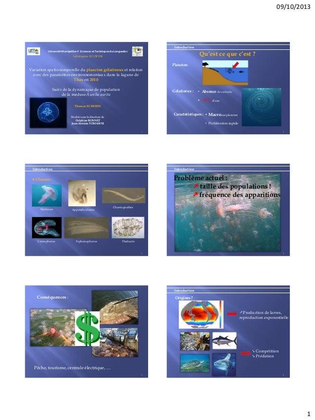 09/10/2013 1 Université Montpellier II Sciences et Techniques du Languedoc Variation spatio-temporelle du plancton gélatin...