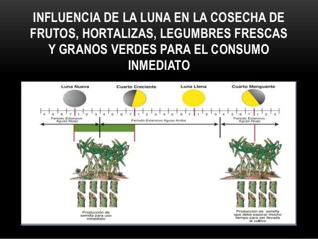 INFLUENCIA DE LAS FASES LUNARES PARA COSECHAR CEREALES, GRANOS SECOS Y CONSERVAR ALIMENTOS
