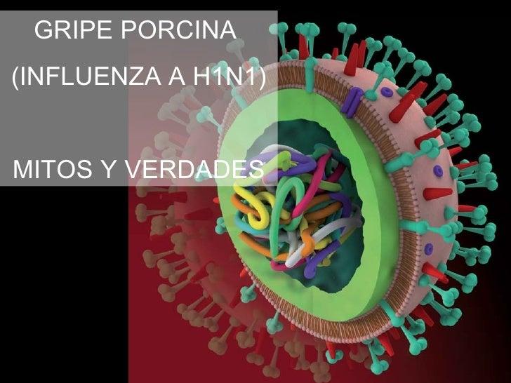 GRIPE PORCINA (INFLUENZA A H1N1)   MITOS Y VERDADES