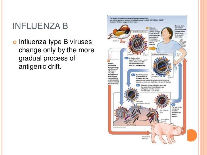 what is type b flu symptoms