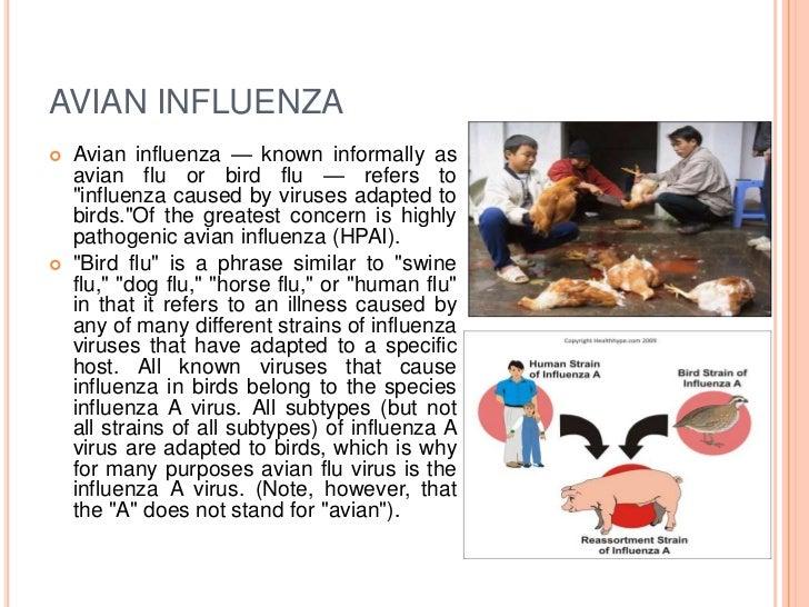 Reconstruction of the 1918 Influenza Pandemic Virus