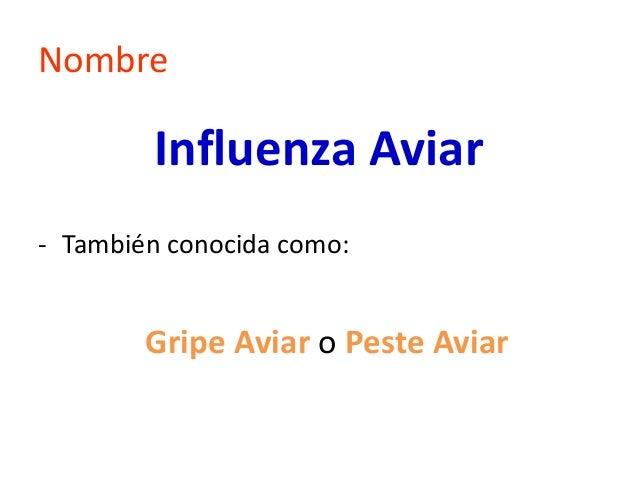 Influenza Aviar Slide 3