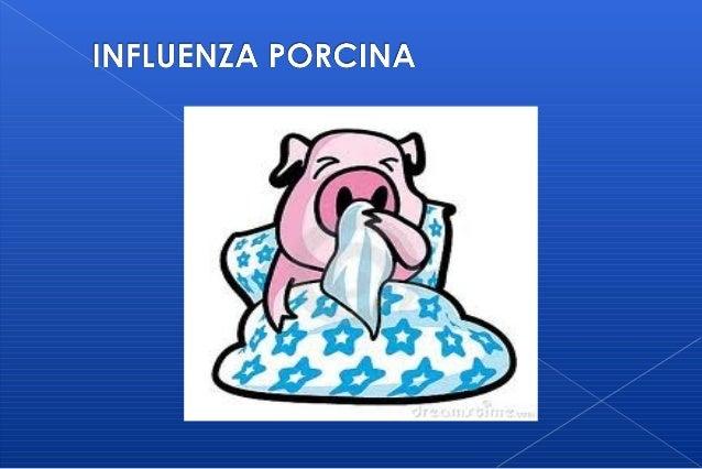   La influenza porcina es una enfermedad respiratoria aguda, infecciosa, del cerdo causada por el virus de influenza tipo...
