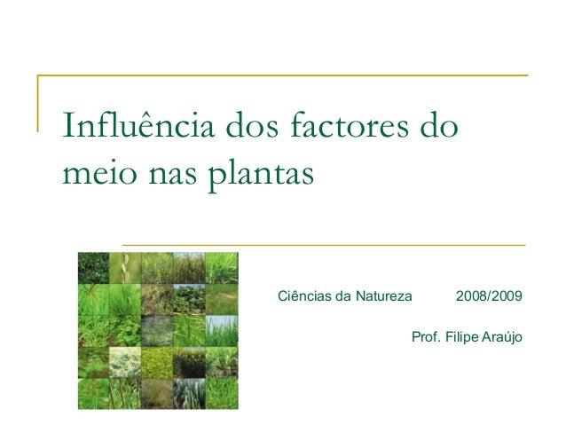 Influência dos factores do  meio nas plantas  Ciências da Natureza 2008/2009  Prof. Filipe Araújo