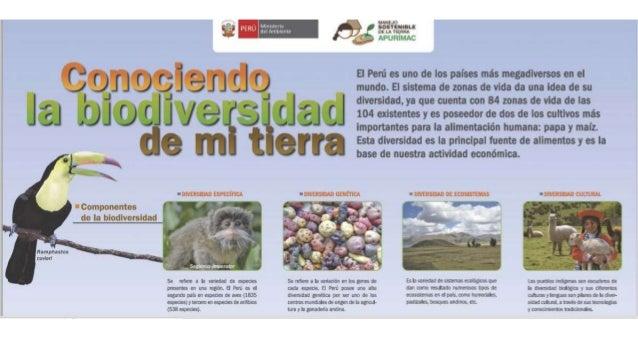Infografia Biodiversidad En Peru 1