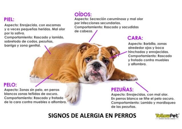 infografia signos alergia en perros