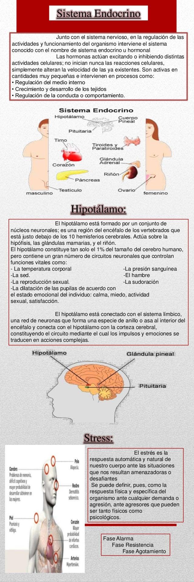 funciones mentales Slide 2