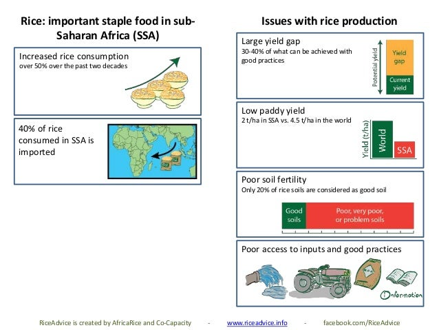 Rice: important staple food in sub- Saharan Africa (SSA) 40% of rice consumed in SSA is imported Low paddy yield 2 t/ha in...