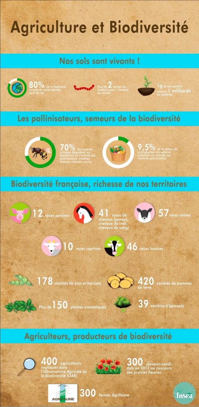 Infographie Agriculture et Biodiversité