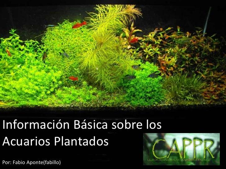 Información Básica sobre los Acuarios Plantados <br />Por: Fabio Aponte(fabillo)<br />