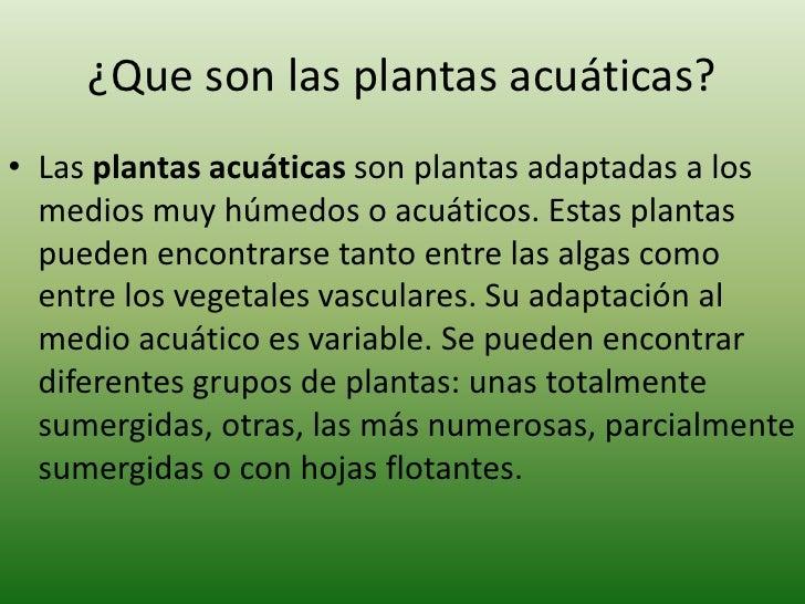 Informaci n b sica sobre los acuarios plantados - Todo sobre las plantas ...