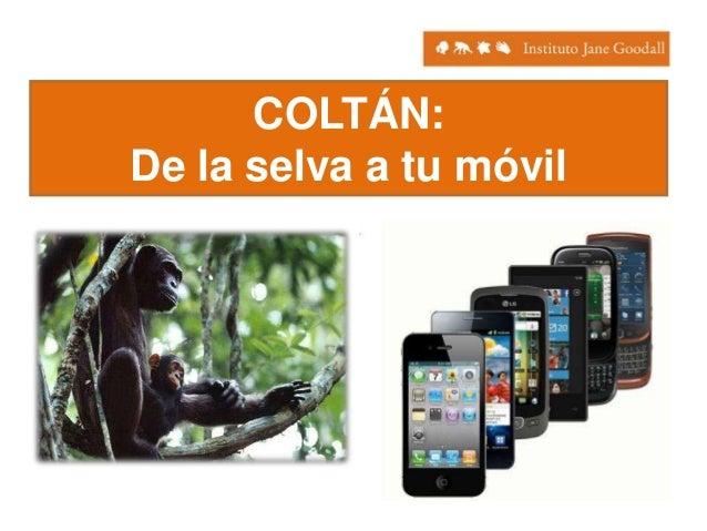 COLTÁN: De la selva a tu móvil