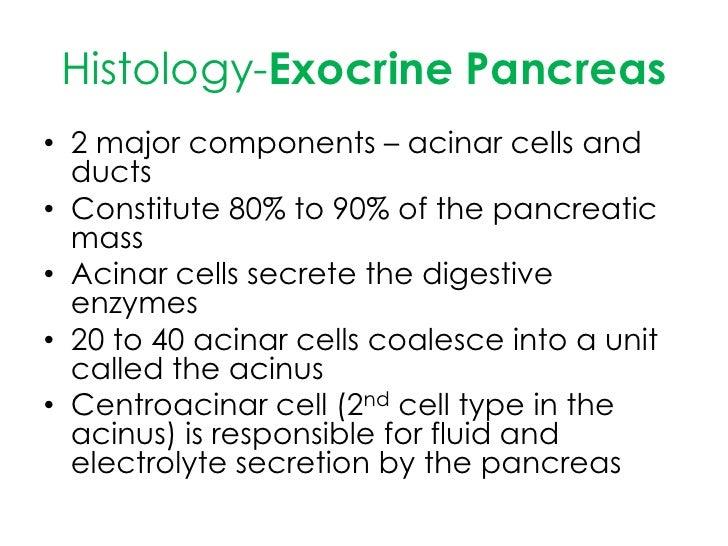 Informacion adicional del pancreas