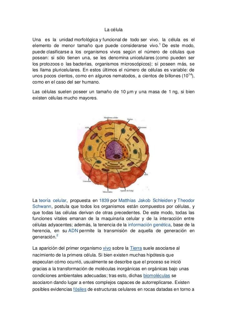La célulaUna es la unidad morfológica y funcional de todo ser vivo. la célula es elelemento de menor tamaño que puede cons...