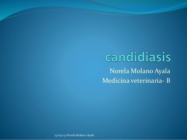 NorelaMolano Ayala  Medicina veterinaria- B  13/09/14 Norela Molano Ayala
