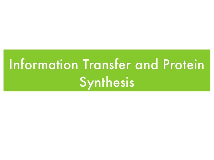 Information Transfer and Protein            Synthesis