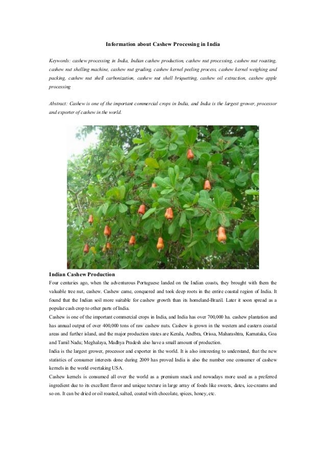 production and marketing of cashew nut in india marketing essay Analysis of cashew nut production in india a senthil dr m p mahesh directorate of economics and statistics and directorate of agricultural marketing cashew nut production india is the largest producer of cashew nut in the world as well as in asia accounting per cent of world.