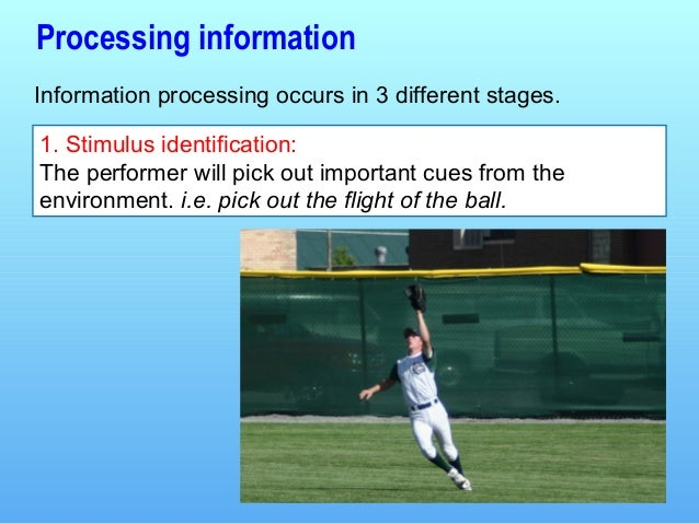 information-processing-l2-3-638 Stages Of Information Processing Examples on human performance, how hitting badminton,