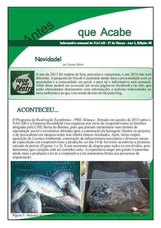 Antes que Acabe Informativo semanal do NACAB - 27 de Março - Ano 2, Edição: 05 O ano de 2013 foi repleto de luta, parceria...