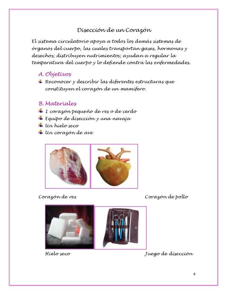 Dorable Pollo Anatomía Externa Elaboración - Imágenes de Anatomía ...