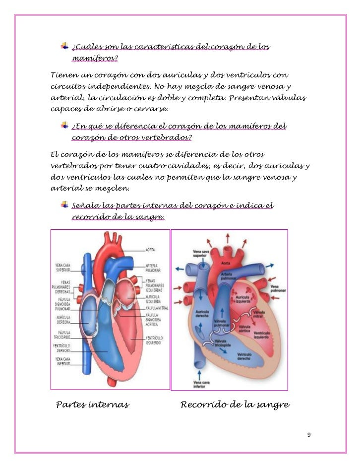 Hermosa Partes De Un Corazón Viñeta - Anatomía de Las Imágenesdel ...