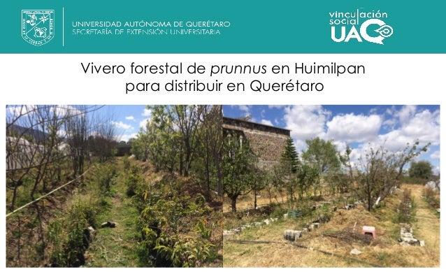 Informe actividades marzo 2017 secretar a de extensi n for Viveros en queretaro
